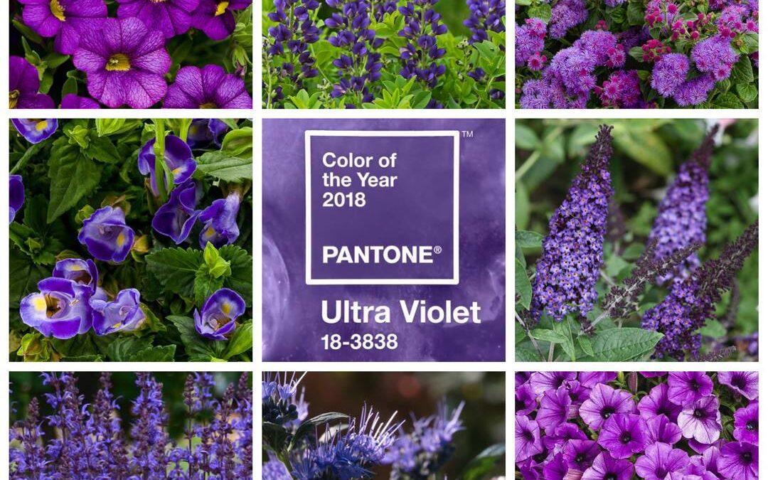 Deciso il Pantone di tendenza per il 2018: Ultra Violet